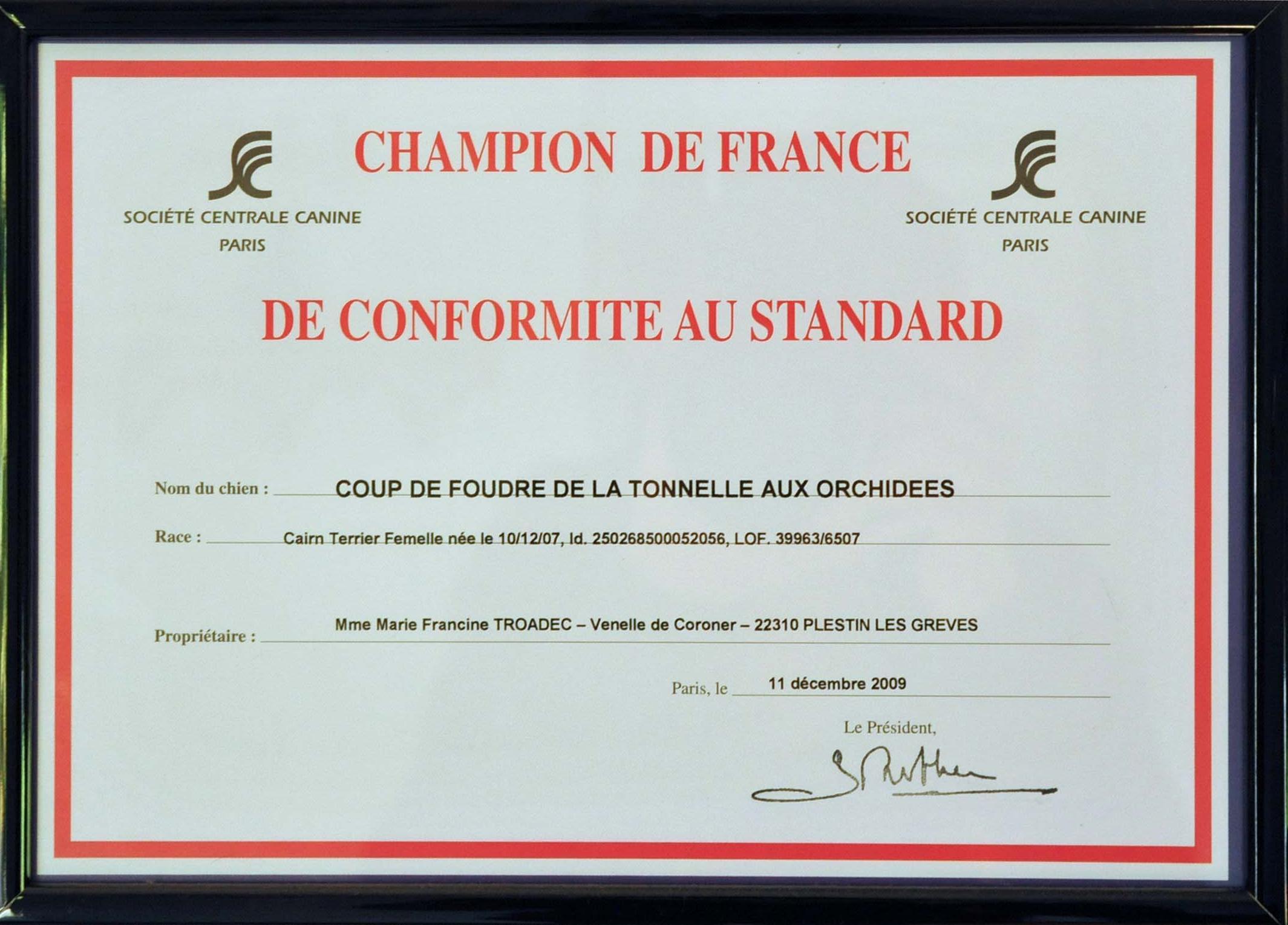 championne-de-france-cairn-terrier