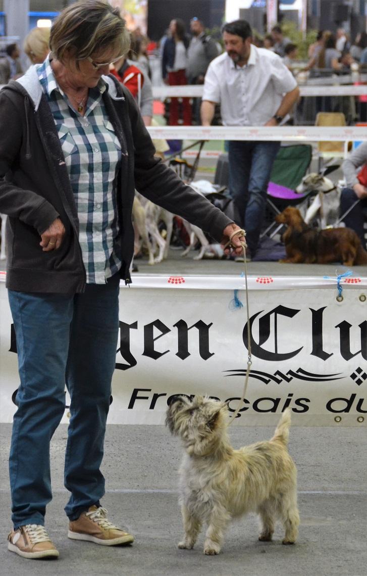 cairn-terrier-expo-troadec-4
